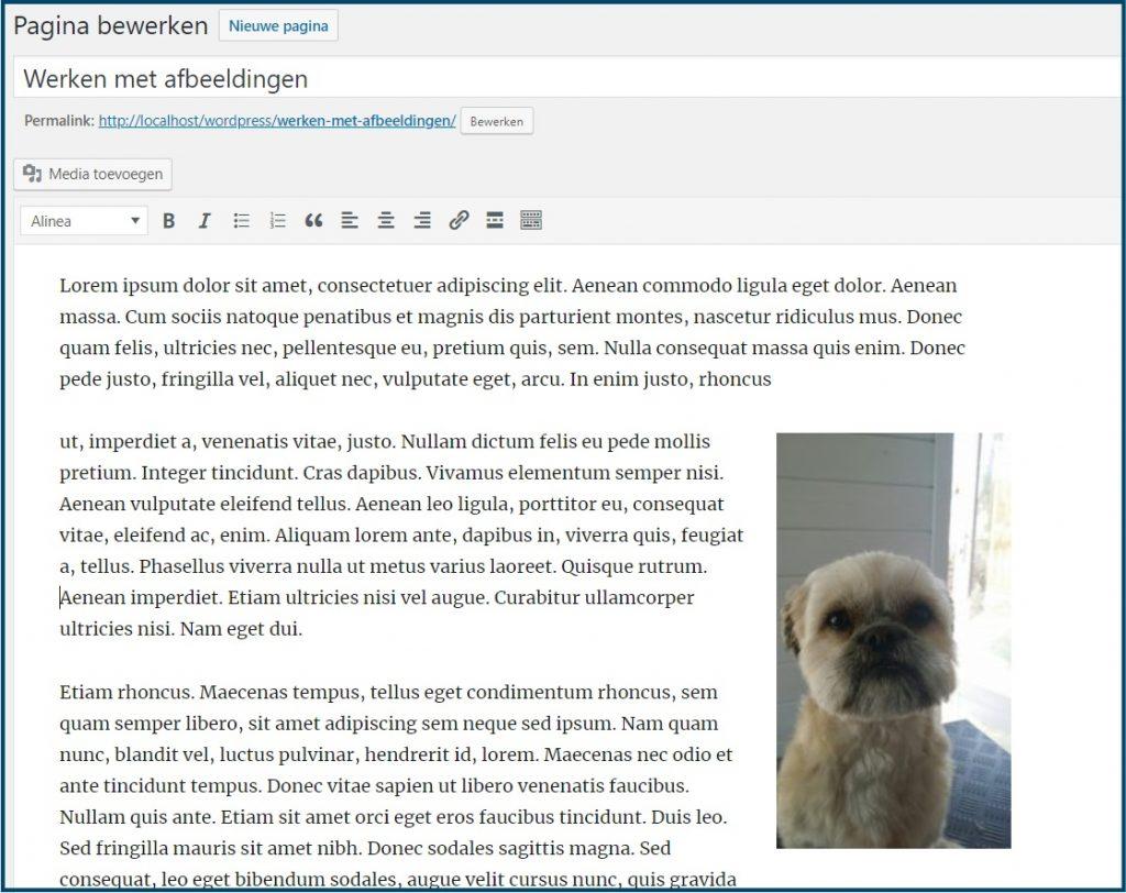 WordPress Media ingevoegd op de pagina